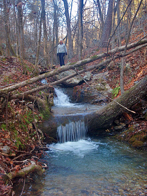 Another Cool Water Fall over a Growing Tree