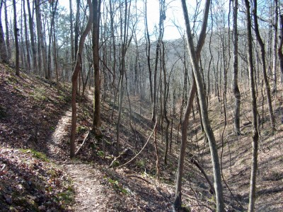 The trail rolls along for much of the run.