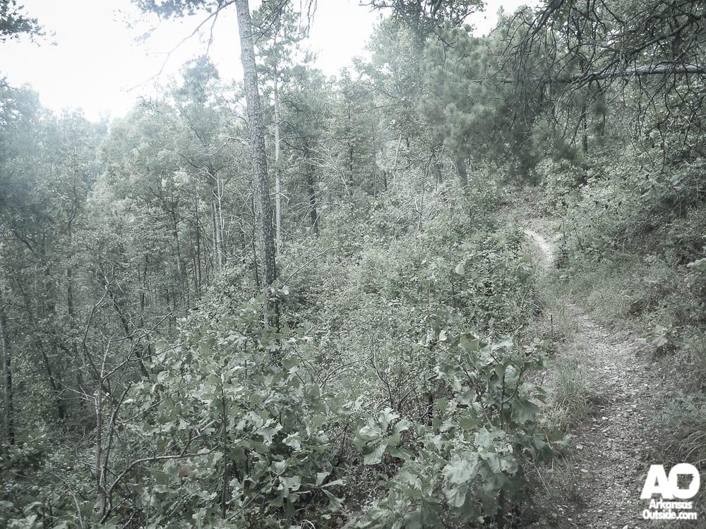 Some narrow bench cut trail.