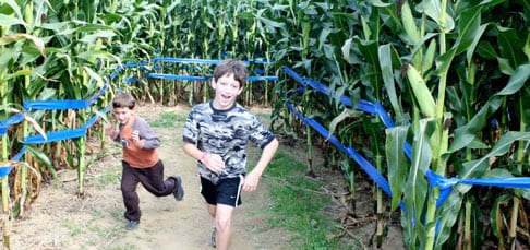 Running through the Farmland Maze.