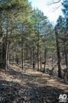 David's Trail Endurance 7K/25K