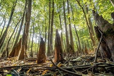 Saint-St-Francis-National-Forrest-Mississippi-State-Park-KSJ_2954ps-1024x682