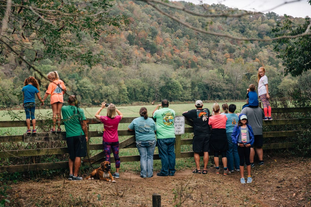 Viewing wild elk in Boxley Valley Historic District. Photo: Terra Fondriest