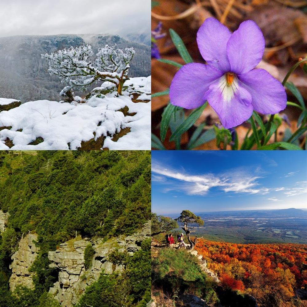 Four Seasons at Mount Magazine State Park, Arkansas.