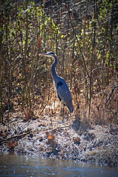 Local Wildlife on Tanyard Creek Nature Trail