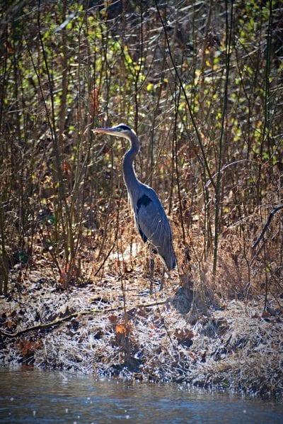 Local Wildlife on Tanyard Creek Nature Trail - The Trailhouse - Northwest Arkansas